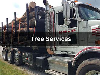Tree Service Bedford, NY 10506